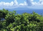 PALM TERRACE -View 1