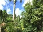 Palm Terrace Gdn 1